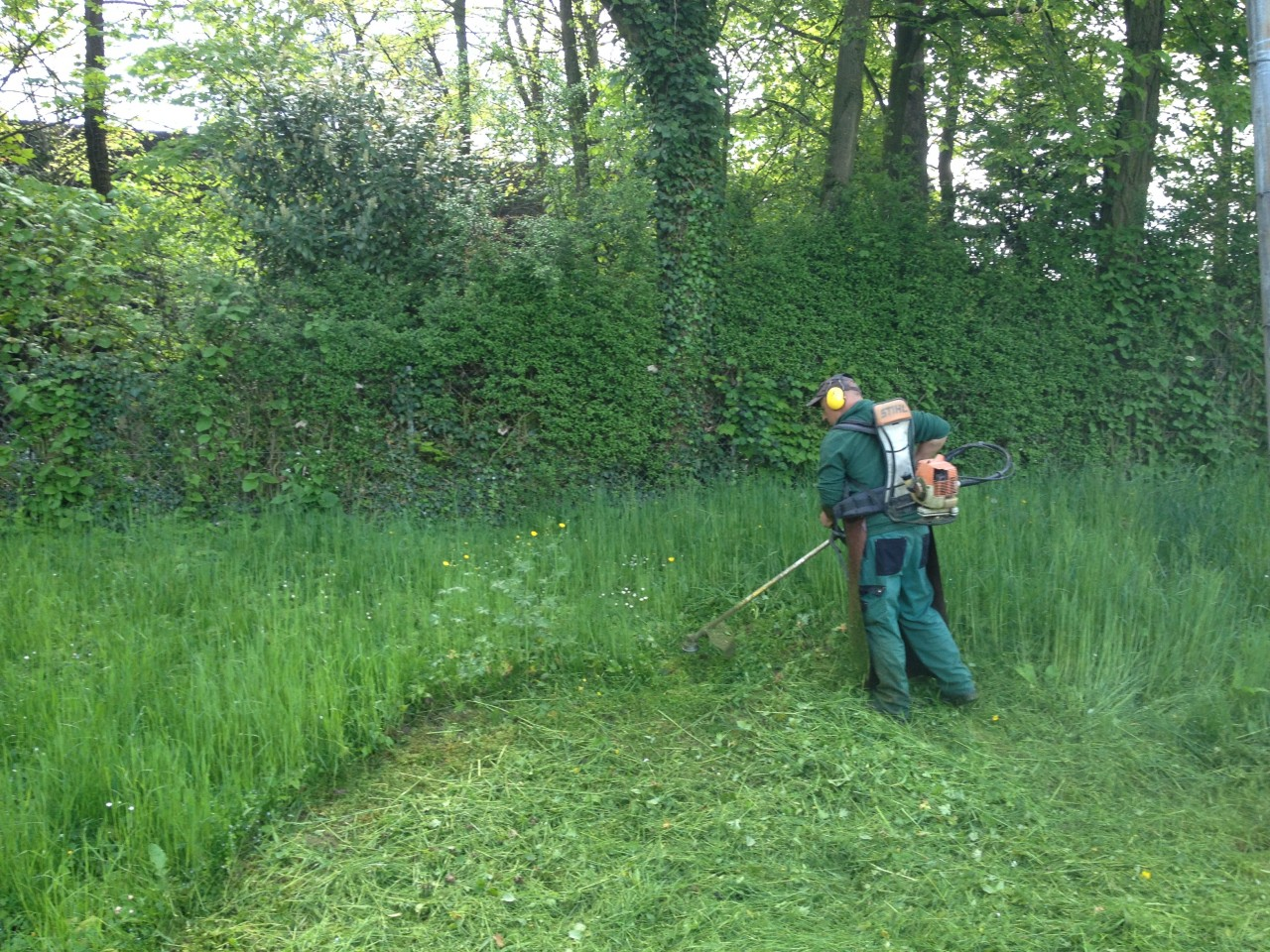Débroussaillage de hautes herbes